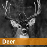 Contest Home Page Deer copy